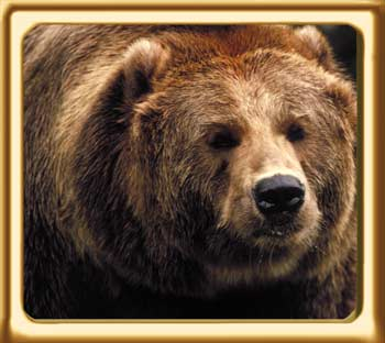 grizzly man analysis essay